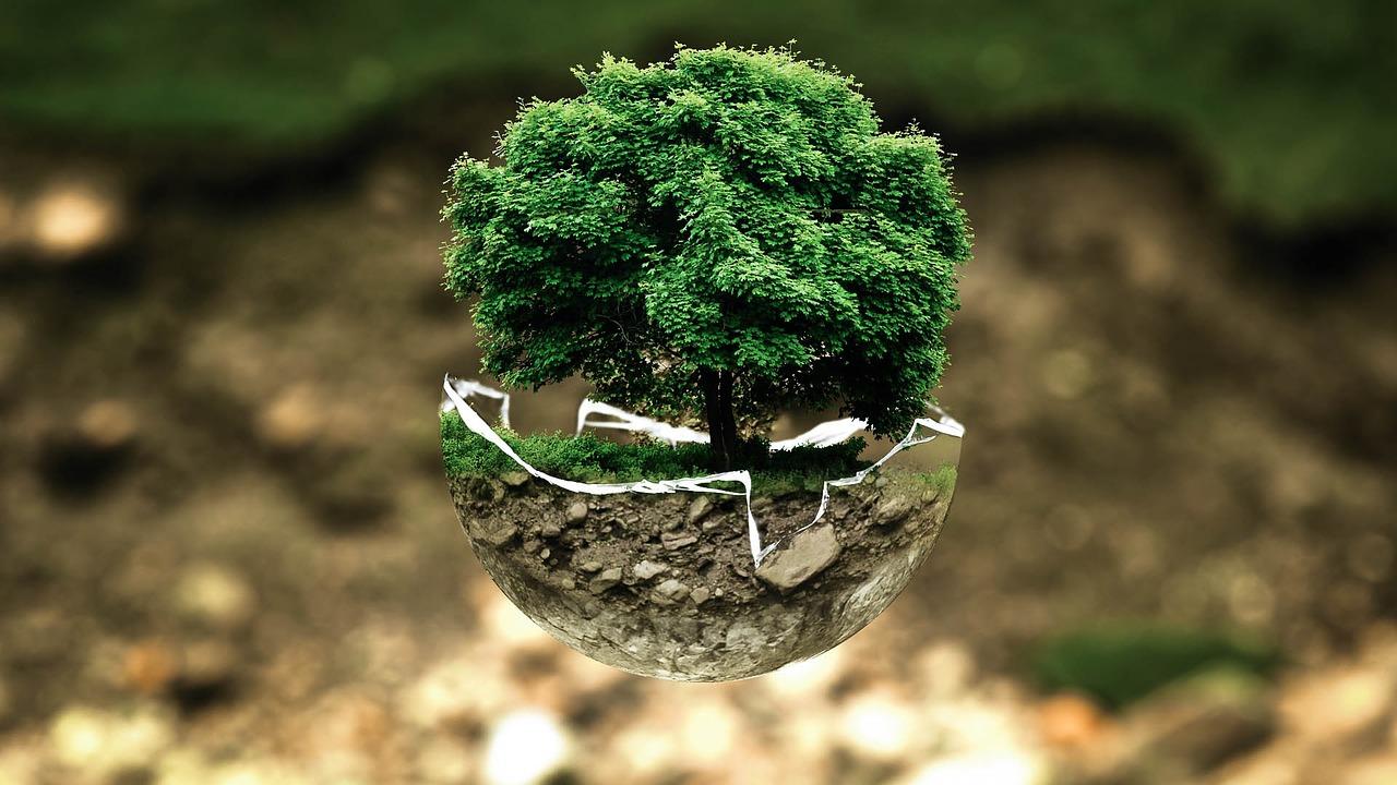 """Nueva Convocatoria de creación de MOOCs en: """"Ecología y Medio Ambiente"""""""